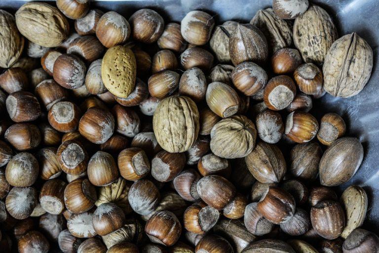 semillas y frutos